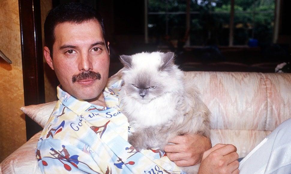 گربه مورد علاقه فردی مرکوری