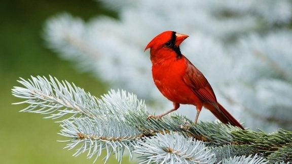 پرندگان ملی کشورهای مختلف