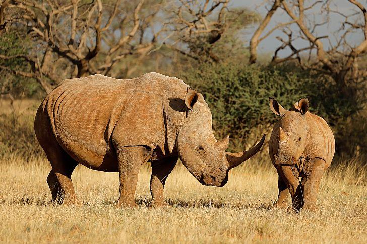 انقراض حیوانات