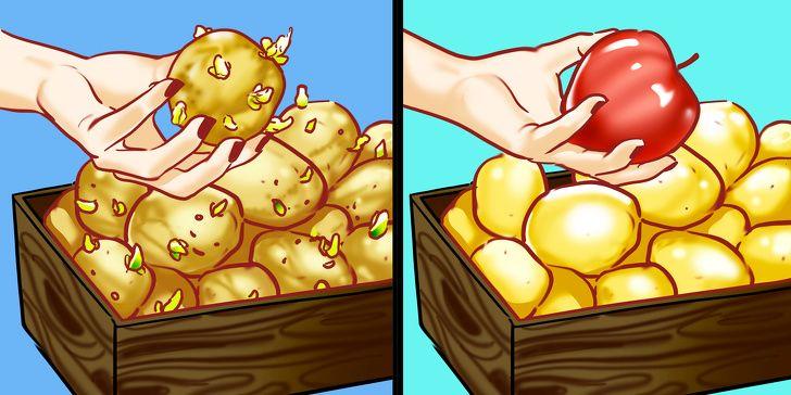 10 ترفند هوشمندانه زندگی - 2. جلوگیری از خراب شدن سیب زمینی