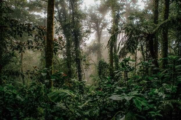 تهدید جنگلهای بارانی حیاتی به نابودی کامل