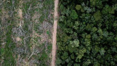 تهدید جنگلهای بارانی حیاتی با شیوع ویروس کرونا و خطر نابودی کامل زیستبوم استوایی