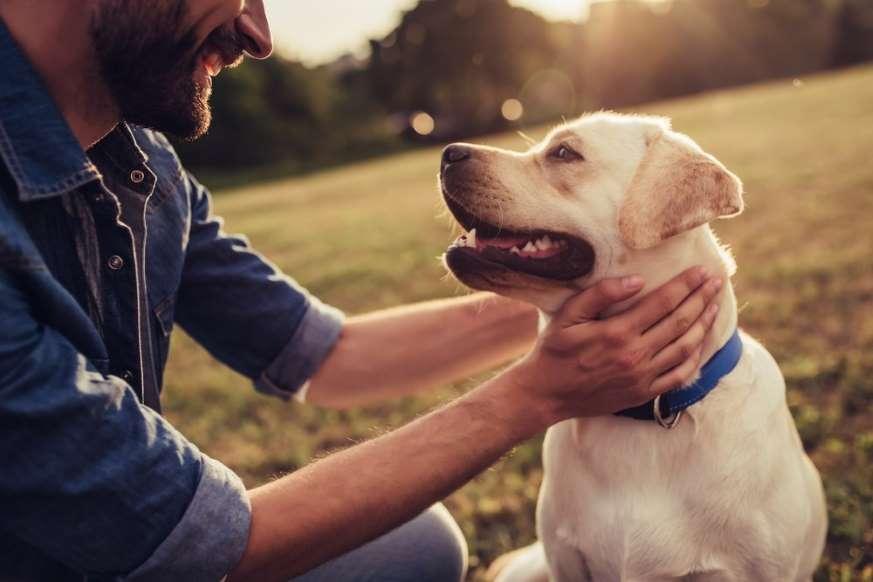 20 نمونه دانش طبیعی - 12. سگها واقعا میتوانند ترس شما را بو بکشند.
