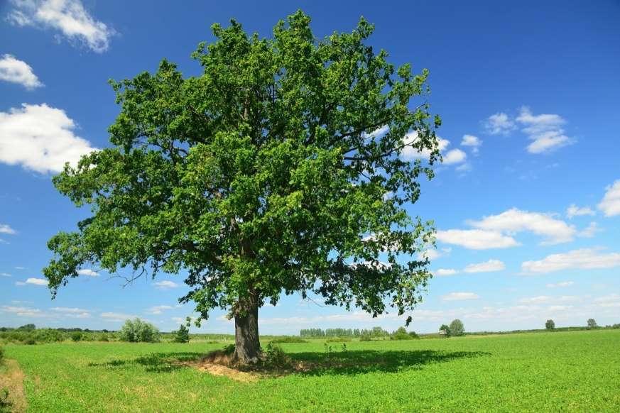 20 نمونه دانش طبیعی - 11. پوست بعضی از درختان قدیمی مانند «سرو همیشه سبز» (Redwood) و «سکویا» (Sequoia) در برابر آتش مقاوم هستند.