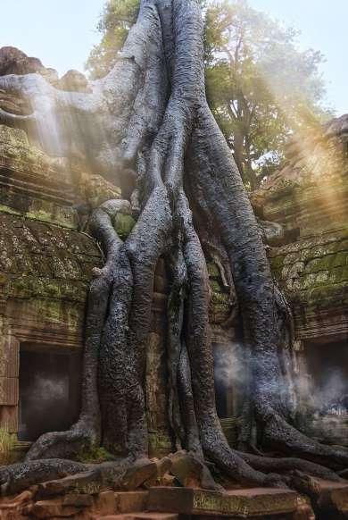 8. معبد Ta Prohm، کامبوج