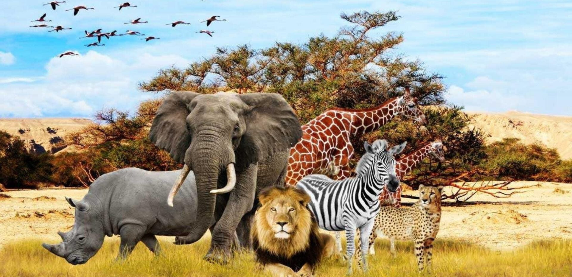 پرجمعیت ترین حیوانات جهان